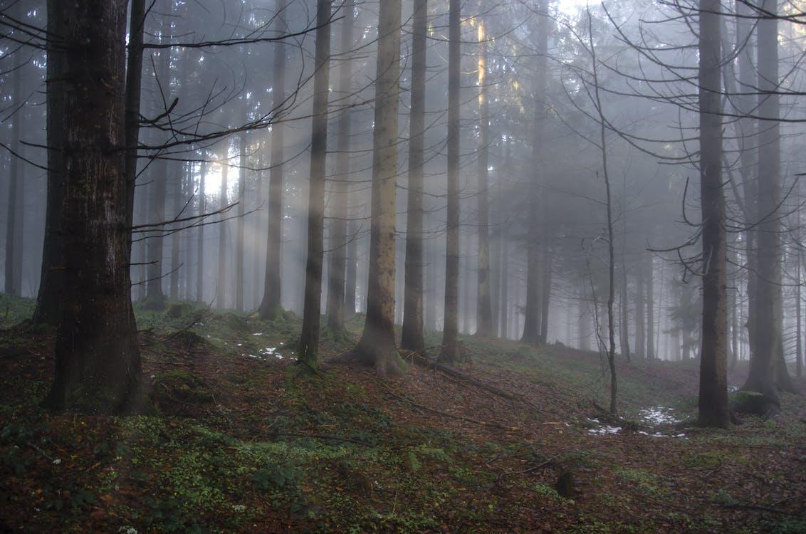 drzewa, gałęzie, krajobraz