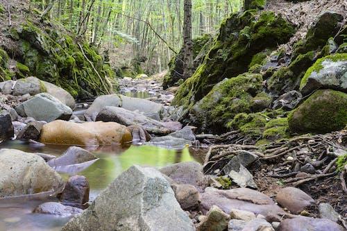 Безкоштовне стокове фото на тему «вода, дерева, каміння, камені»