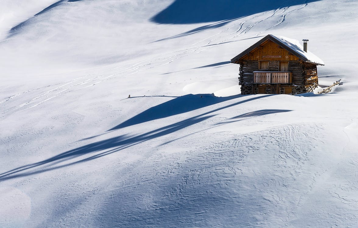 белый, дерево, зима