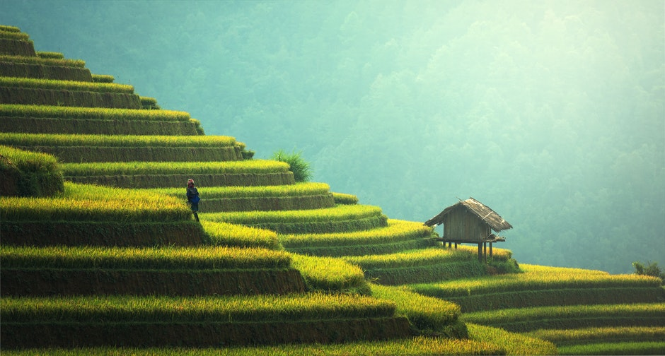 agriculture, asia, cat