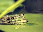 nature, water, animal