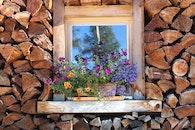wood, flowers, wall