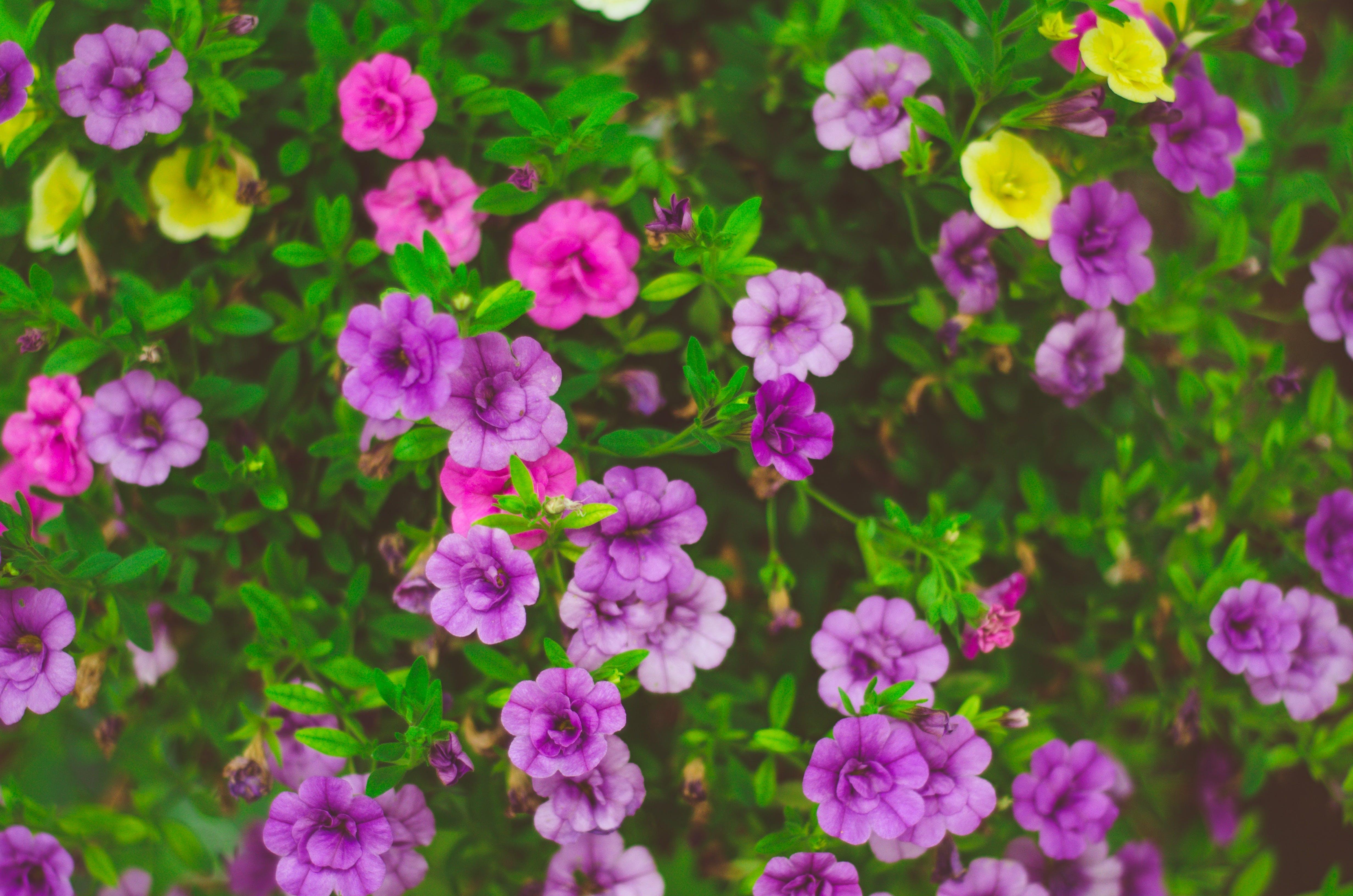 Macro Photo of Purple Flowers