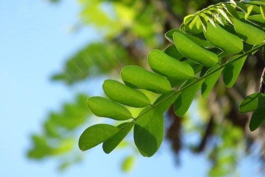 Free stock photo of nature, plant, leaf, tree