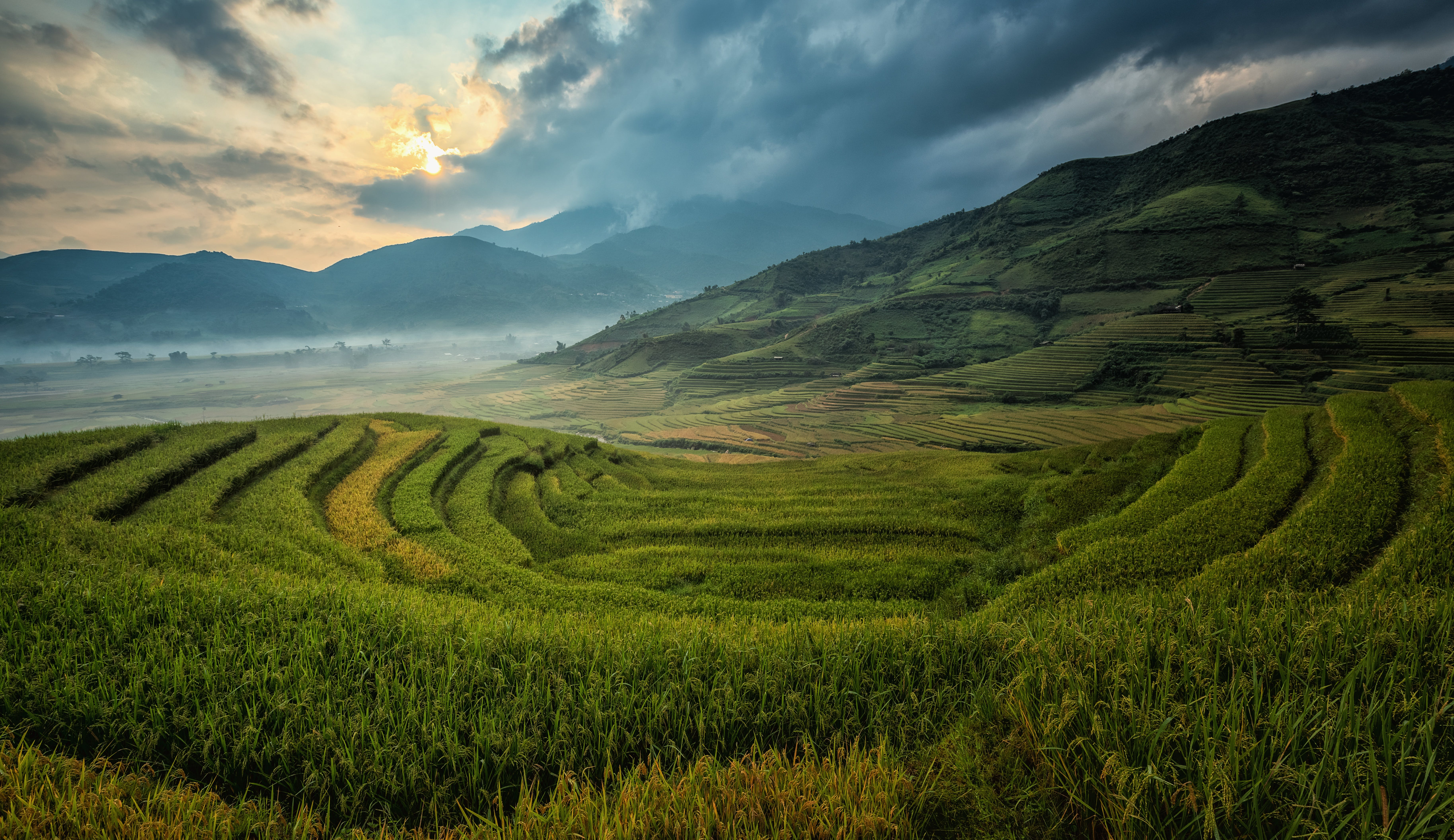 Free stock photo of agriculture, asia, canyons, cat