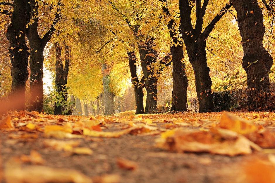 alley, autumn, autumn colours