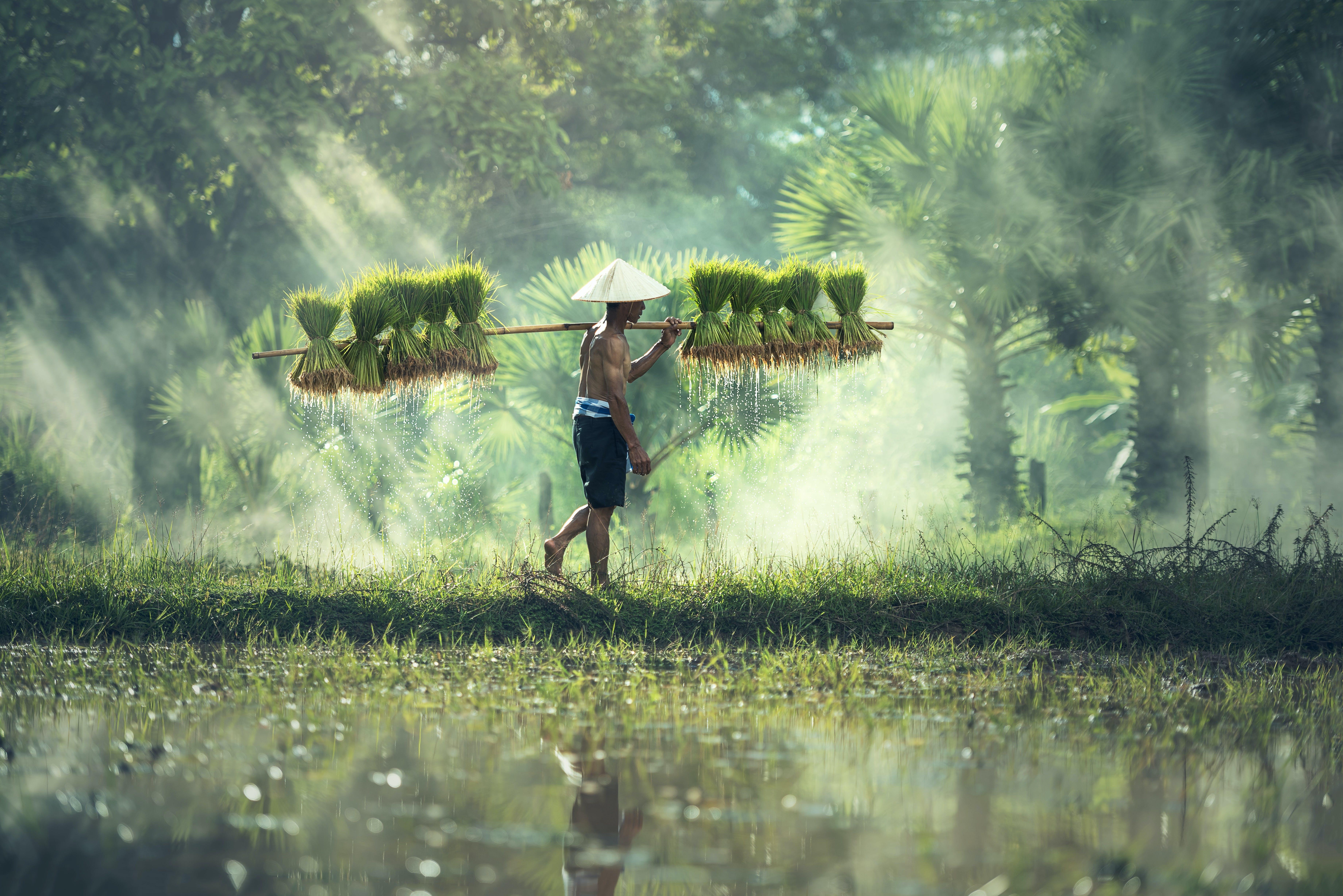 agriculture, asia, countryside