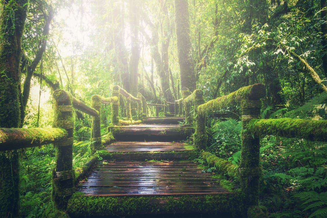Wooden Bridge on Rainforest