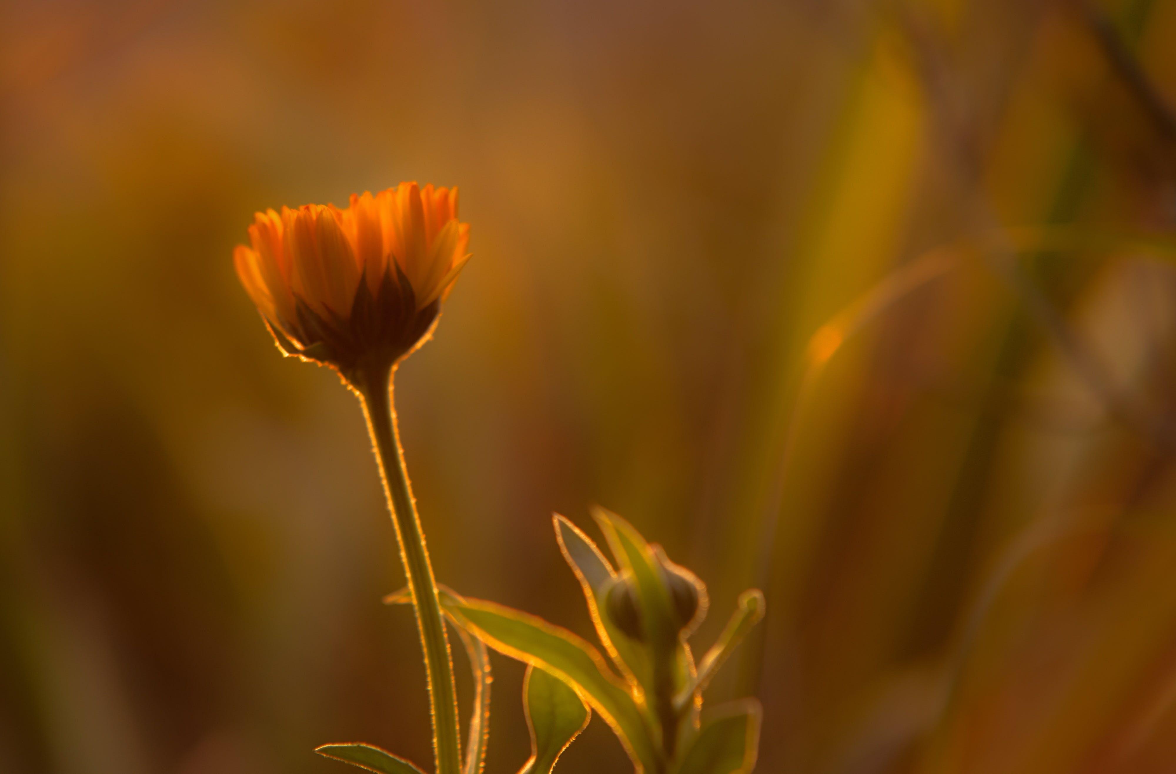 Free stock photo of light, nature, sky, sunset