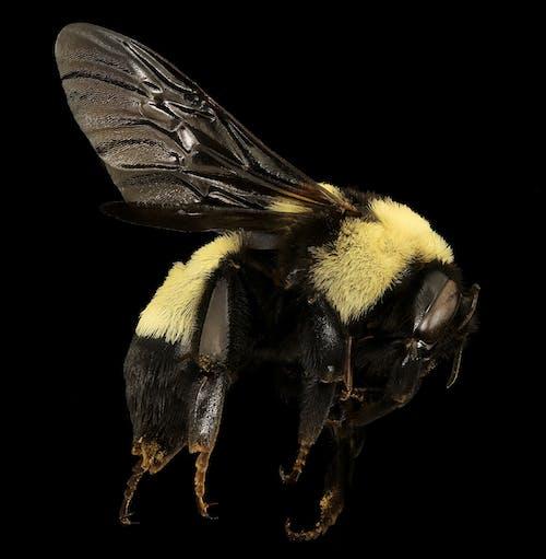 Foto profissional grátis de abelha, animais selvagens, close, erro