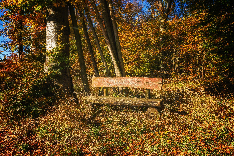 Gray Wooden Bench Near Tree