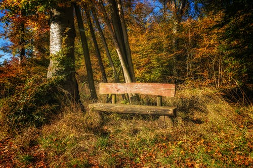 Gray Wooden Bench Near Tree