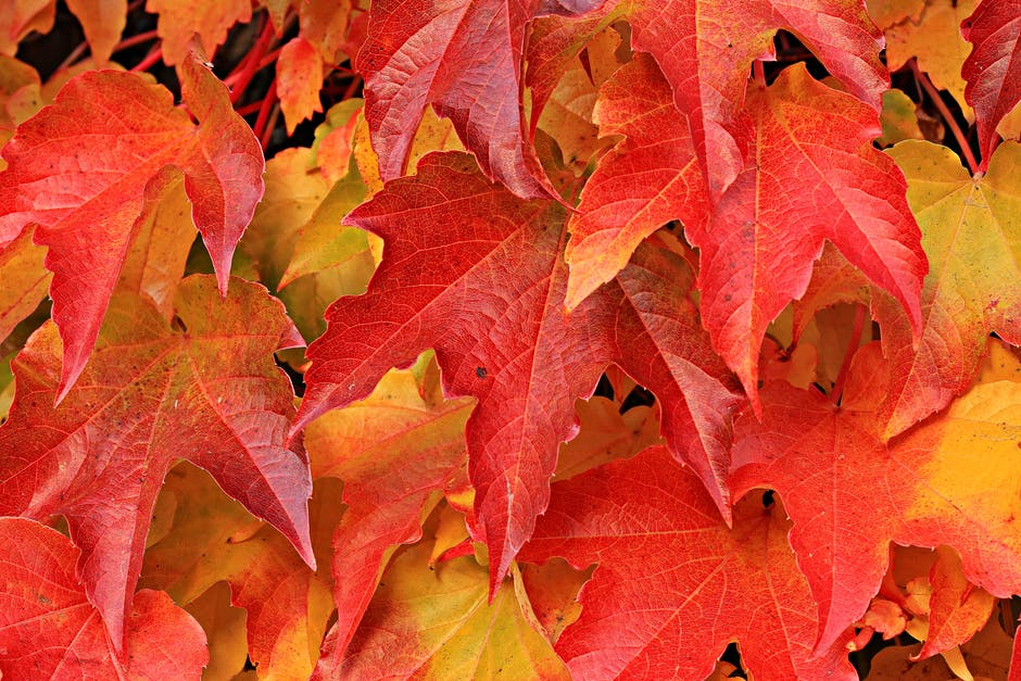 autumn, autumn colours, autumn leaves