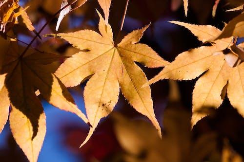光, 增長, 太陽, 季節 的 免費圖庫相片