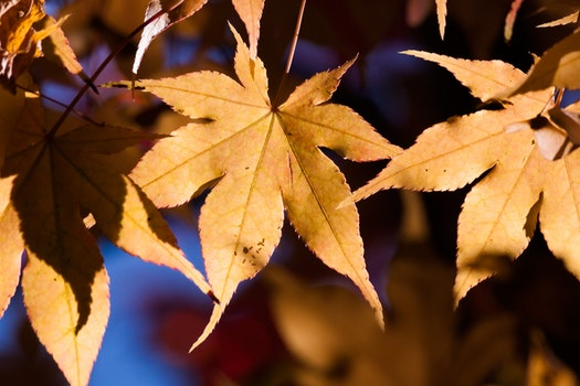 Free stock photo of light, sun, blur, leaves