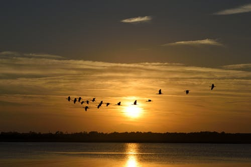 Silhouette Photography of Flock of Flying Birds With Sunset Background