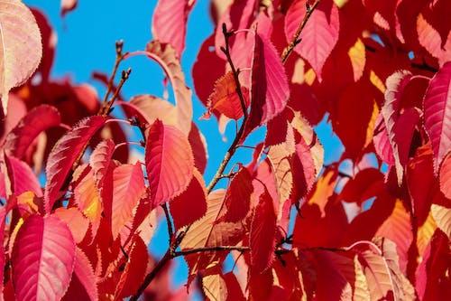 Darmowe zdjęcie z galerii z czerwony, drzewo, gałęzie, jaskrawy