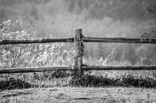 Grayscale Photography of Wooden Fence