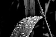 black-and-white, art, water