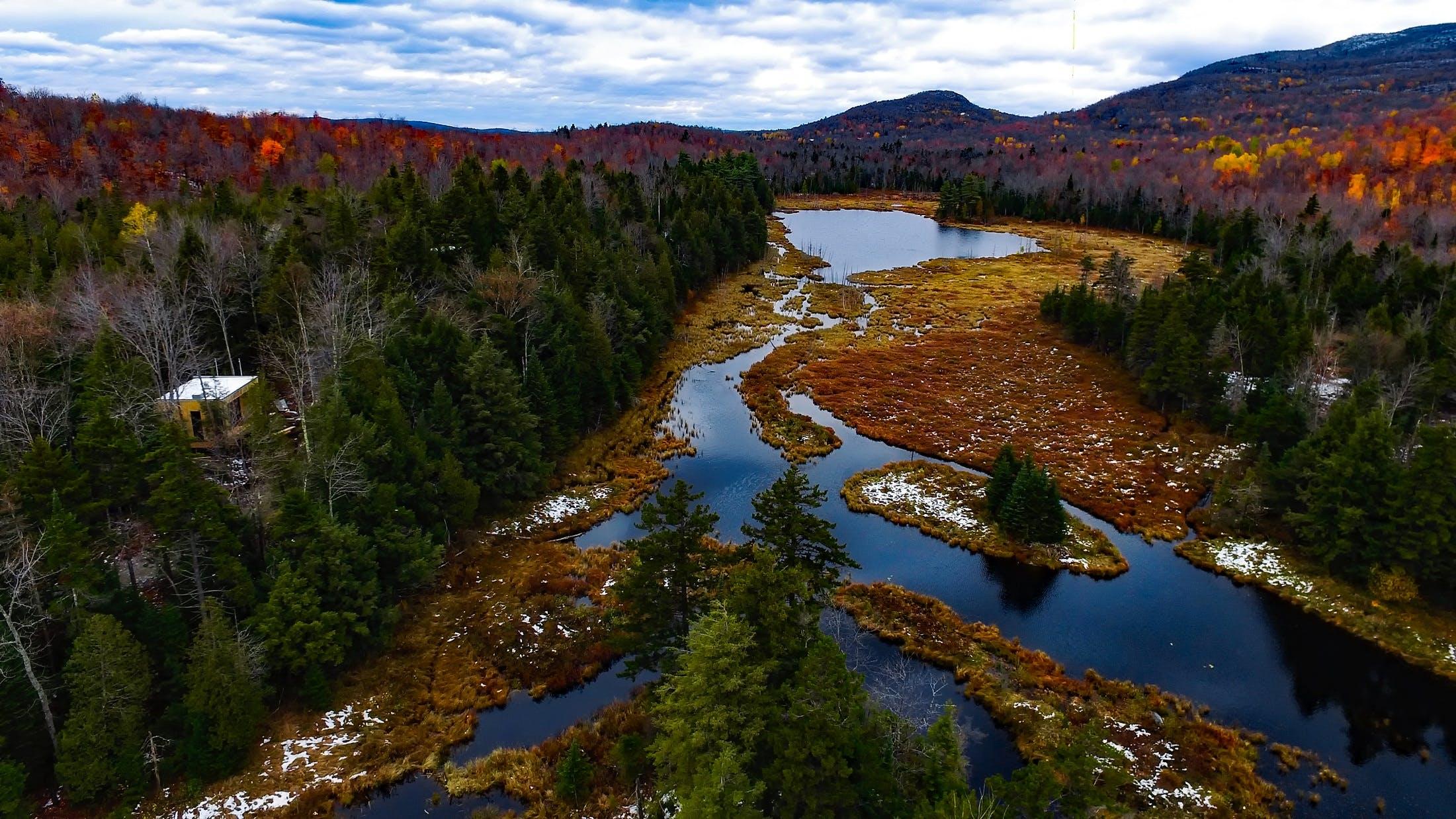 Photos gratuites de arbres, bois, eau, flot
