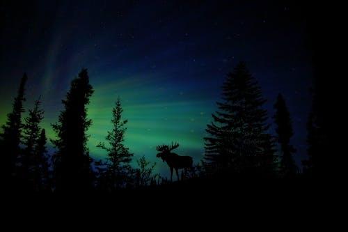 Základová fotografie zdarma na téma atmosféra, borovice, hvězdná obloha, hvězdy