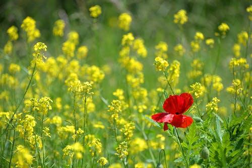 Foto stok gratis bidang, bunga-bunga, flora, kilang