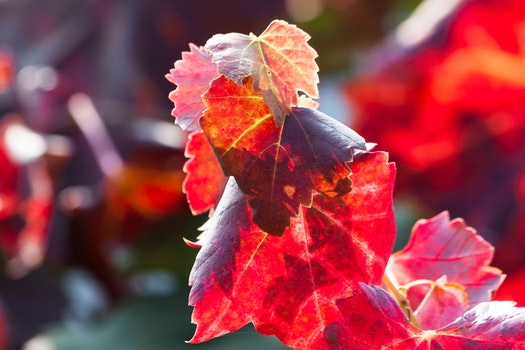 Free stock photo of sunny, plant, leaf, autumn