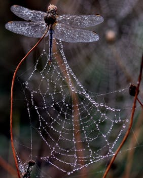blur close up dew dragonfly