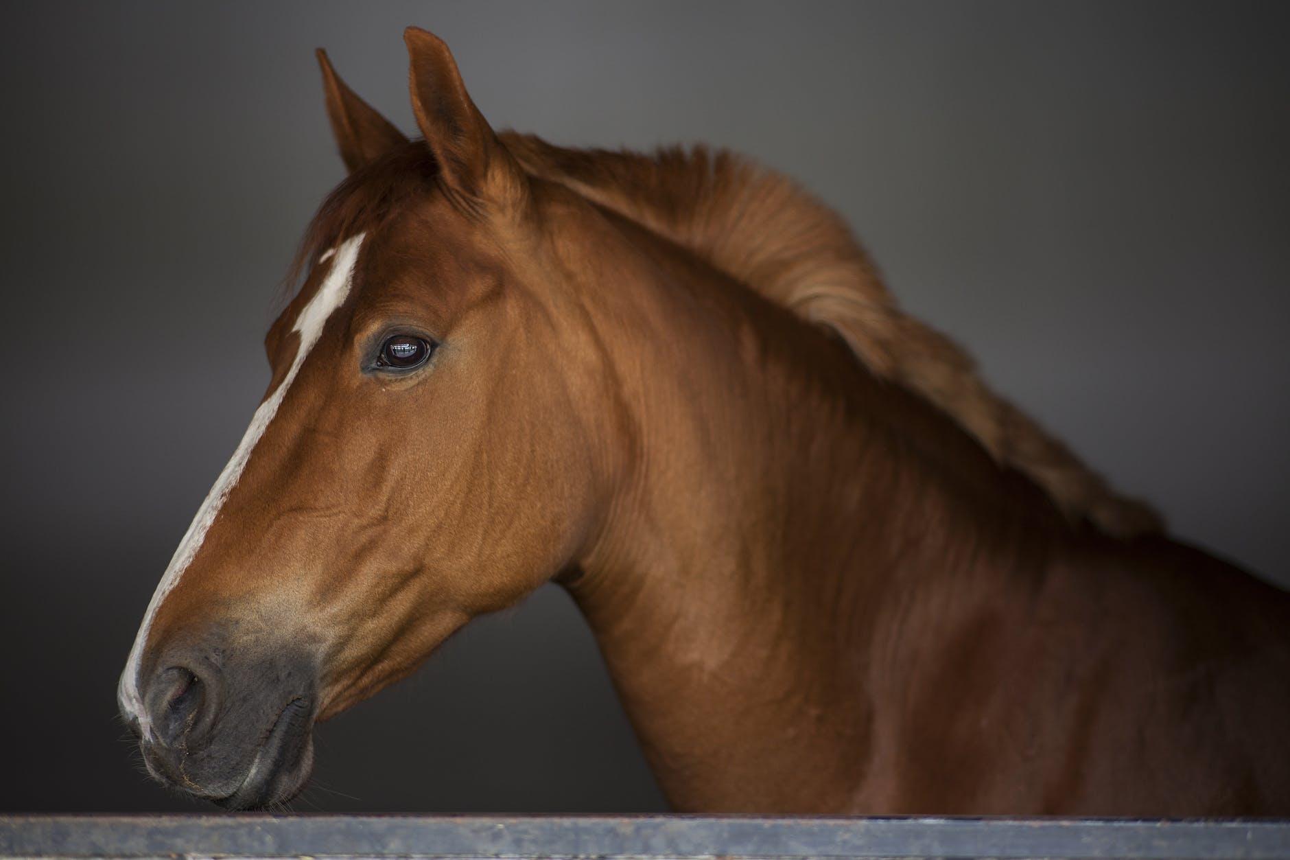 horse head with dark background