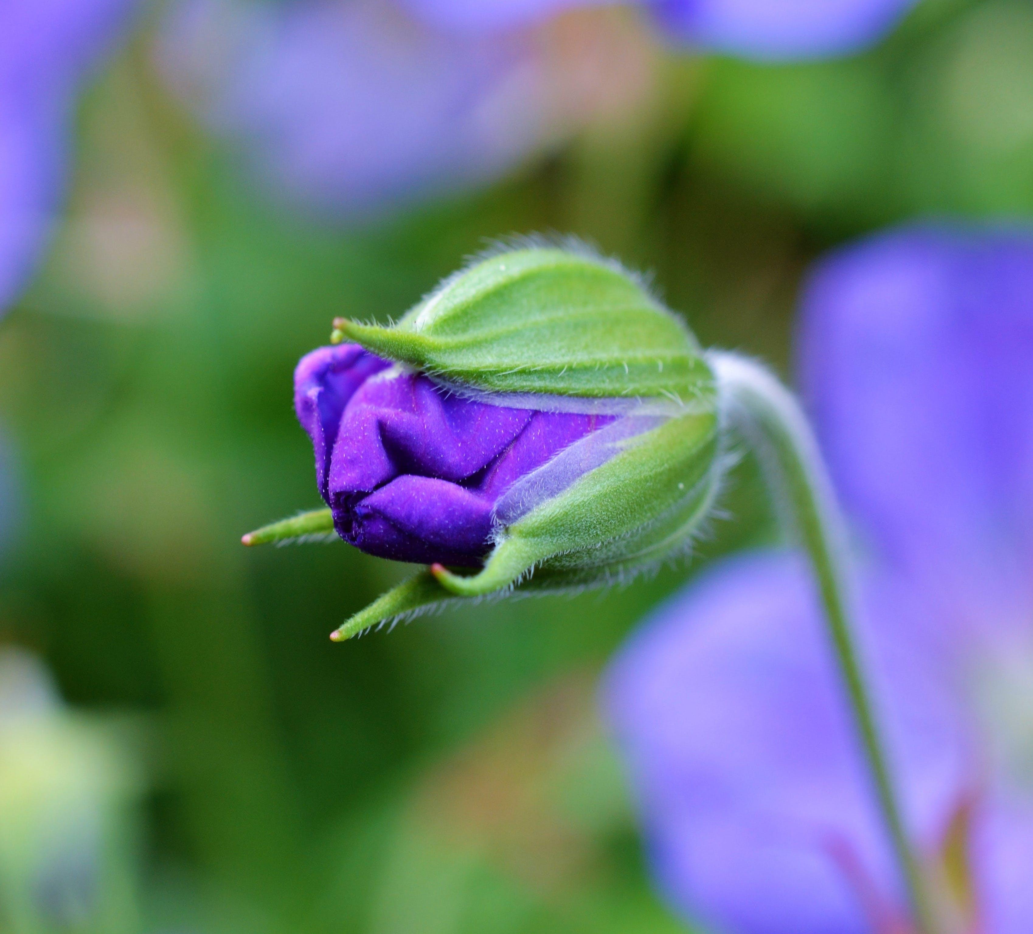 Free stock photo of nature, blue, summer, garden