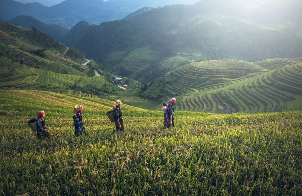 People on Rice Terraces