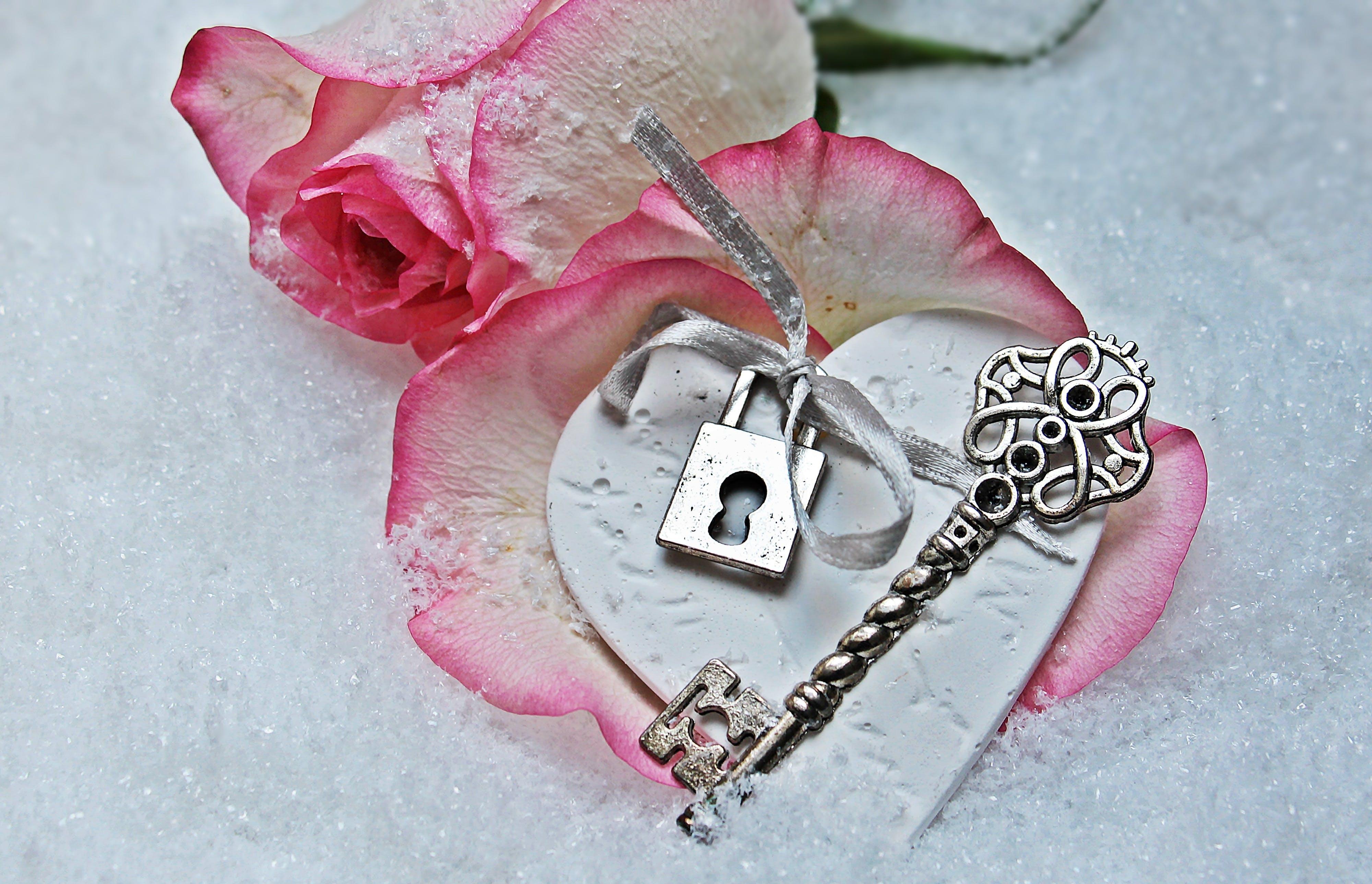 Free stock photo of love, heart, romantic, valentine's day