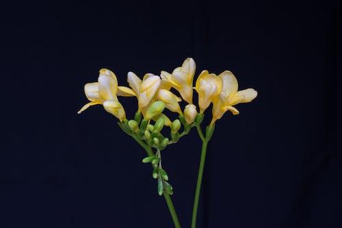 增長, 微妙, 明亮, 景觀植物 的 免費圖庫相片