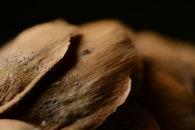 food, wood, dry
