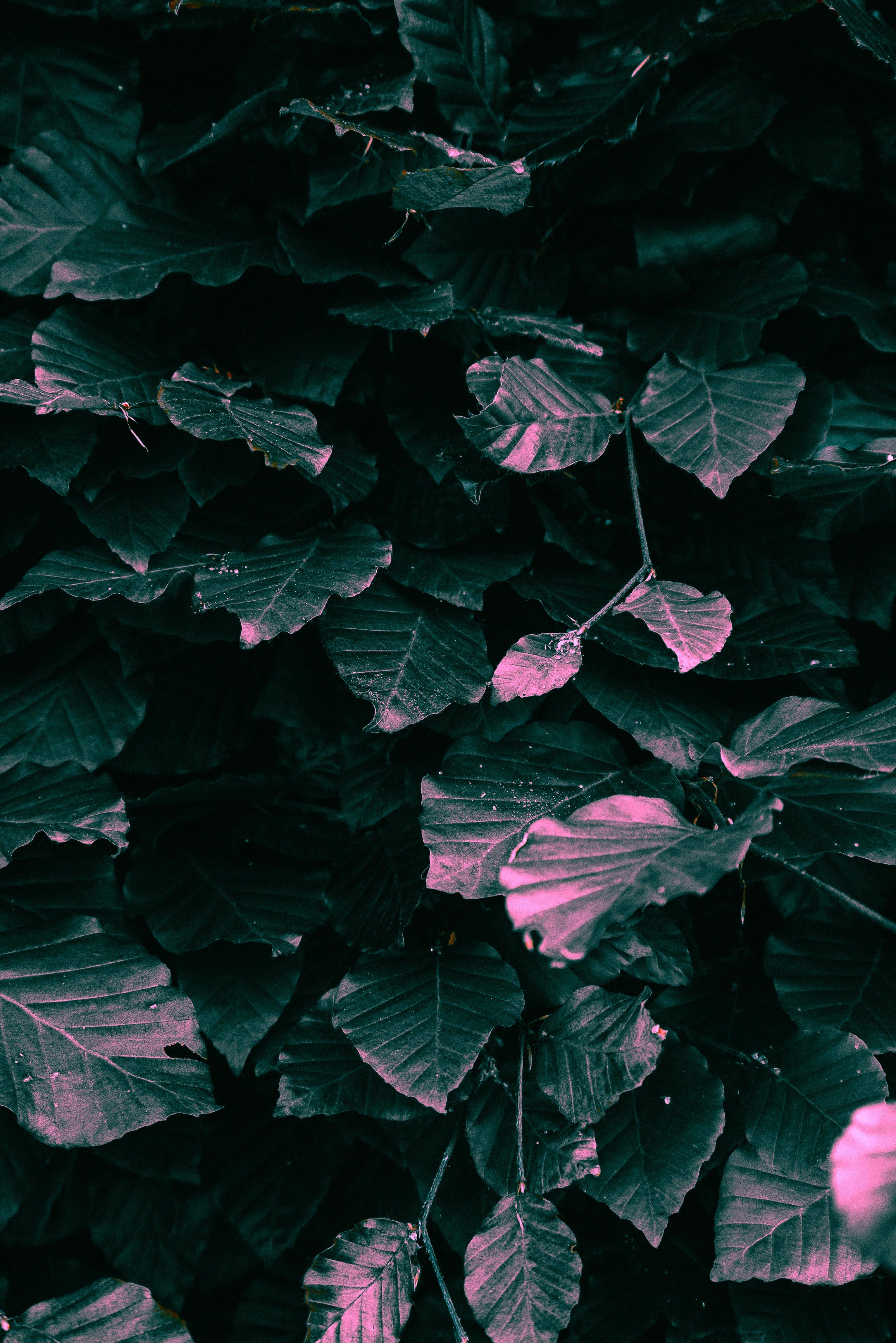 Základová fotografie zdarma na téma listy, příroda, rostlina