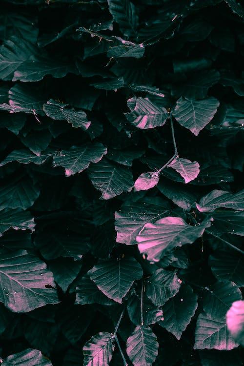 fulles, natura, naturalesa
