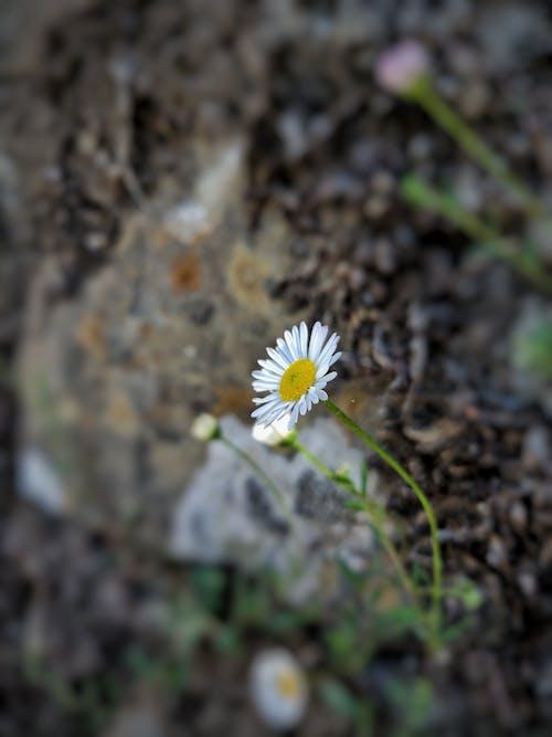 Fotos de stock gratuitas de amor, Arte, cerezos en flor, flor