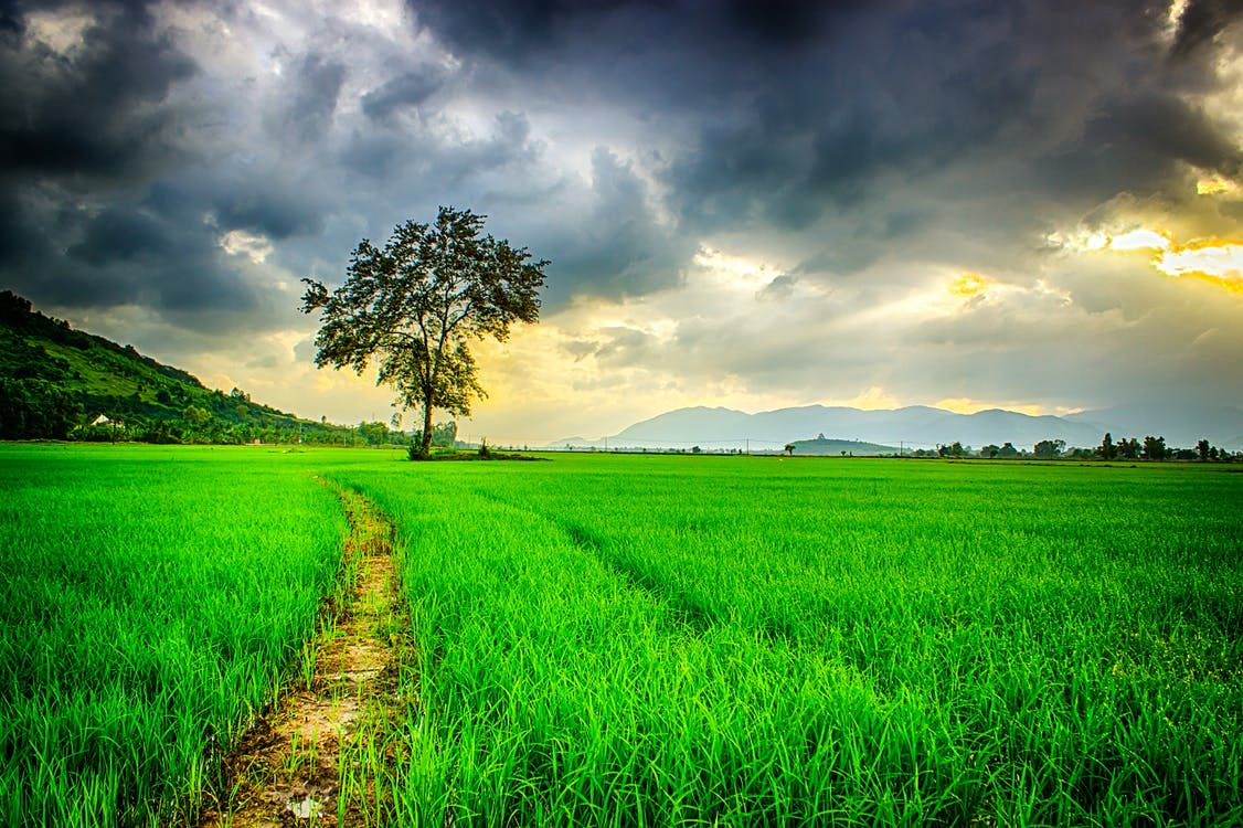 Road Path Surrounded by Green Grasses