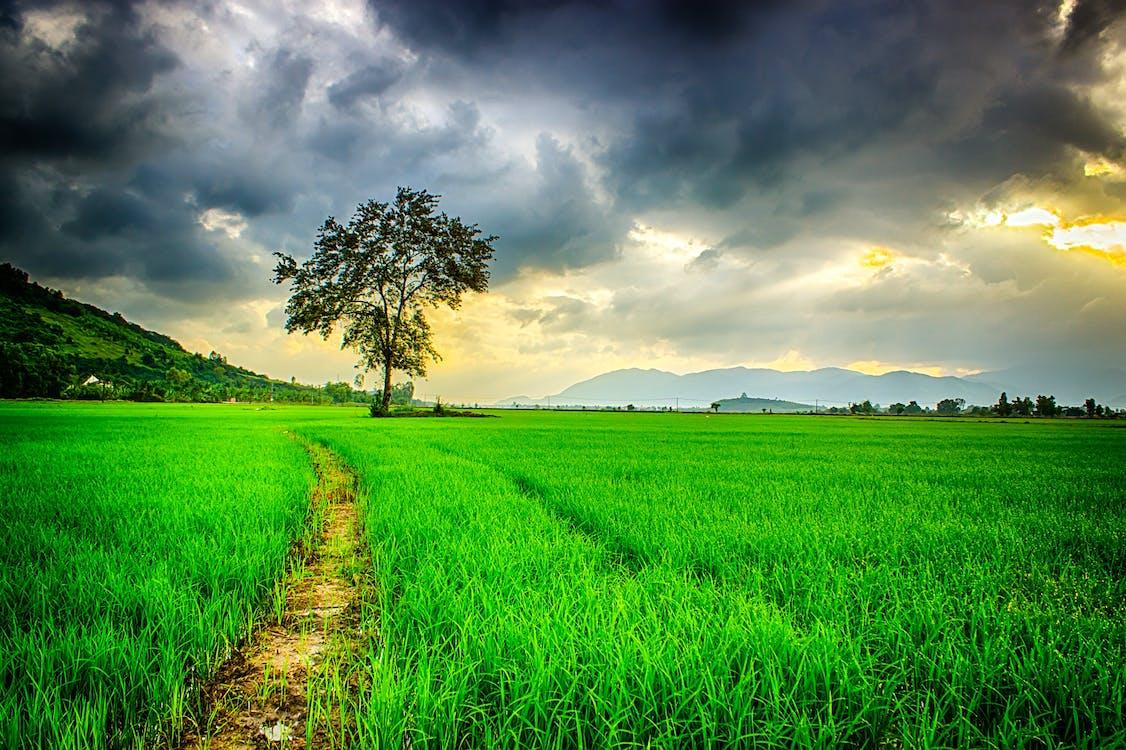 bewolkt, boerderij, gras