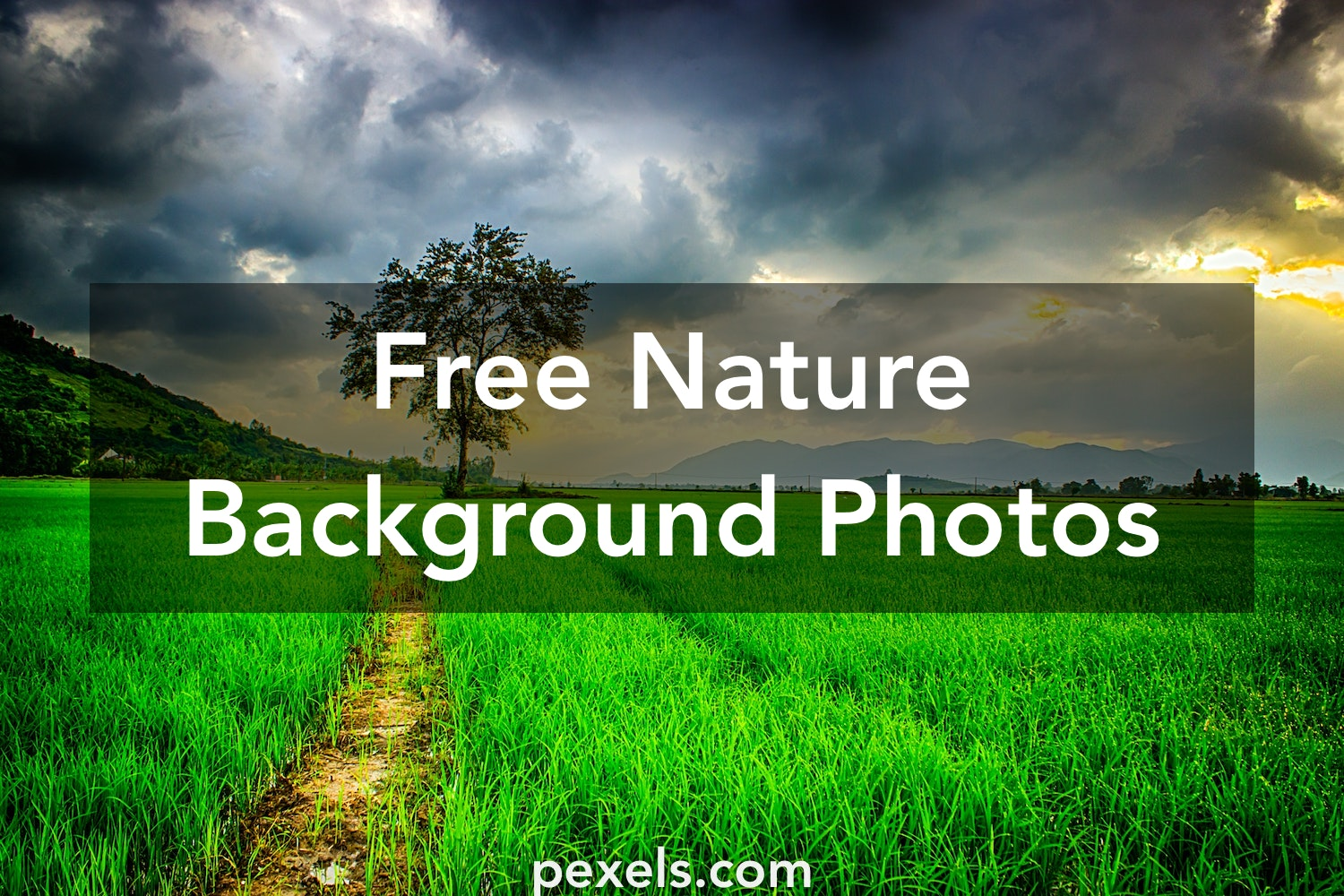 1000+ Great Nature Background Photos · Pexels · Free Stock