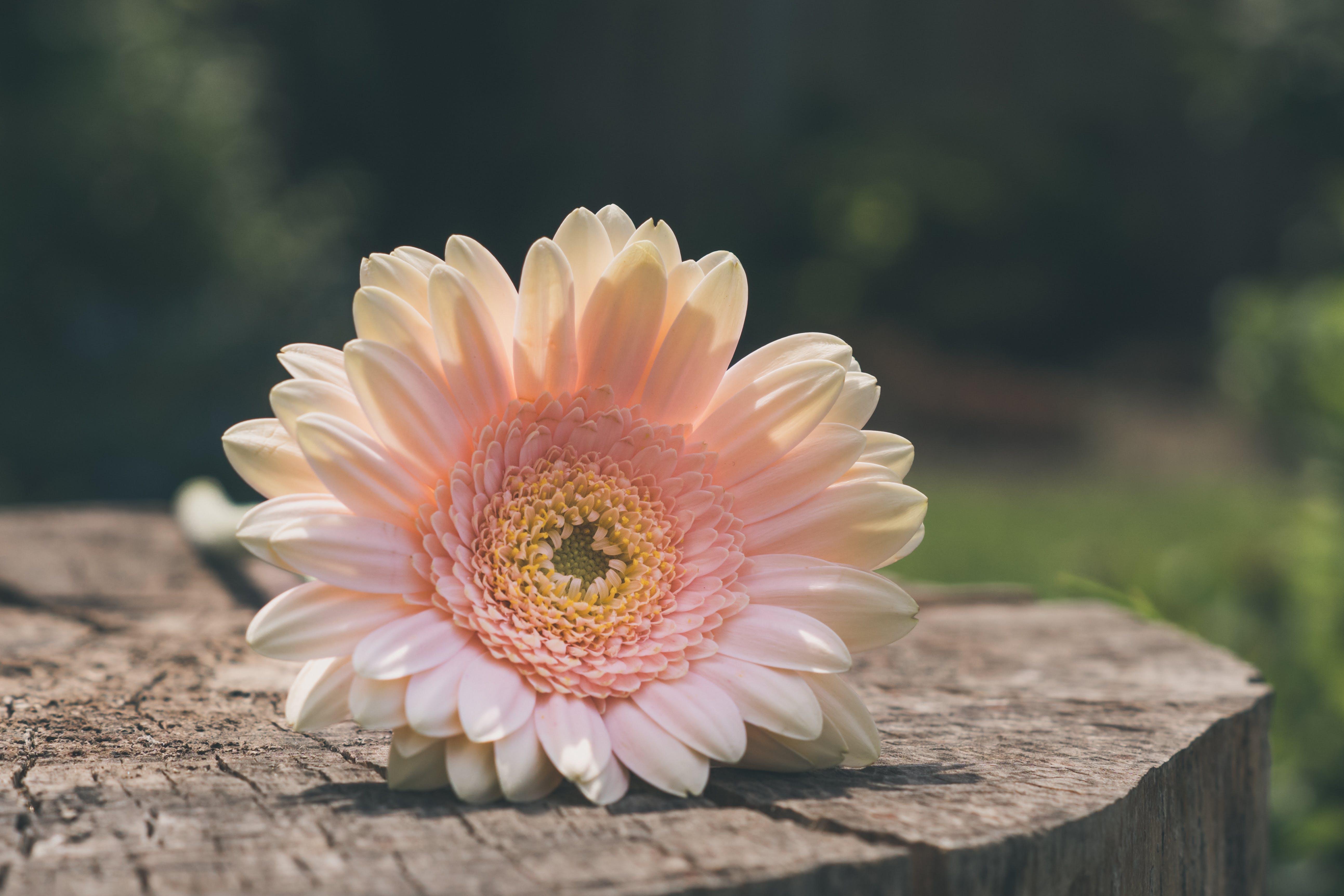 Foto d'estoc gratuïta de flor, flors, fons borrós, fusta