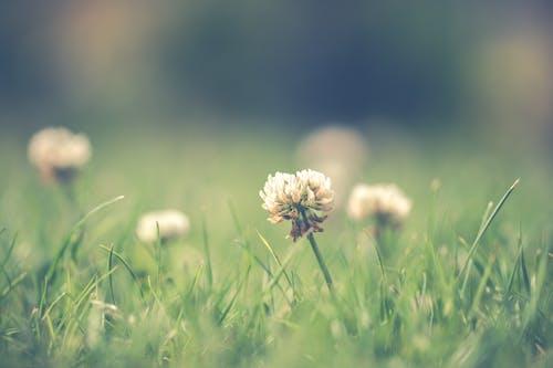 Gratis stockfoto met blad, bladeren, bloeien, bloeiend