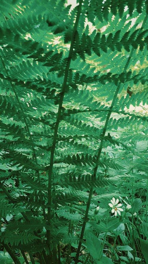 คลังภาพถ่ายฟรี ของ พฤกษา, พืชสีเขียว, ภาพพื้นหลัง, วอลล์เปเปอร์มือถือ