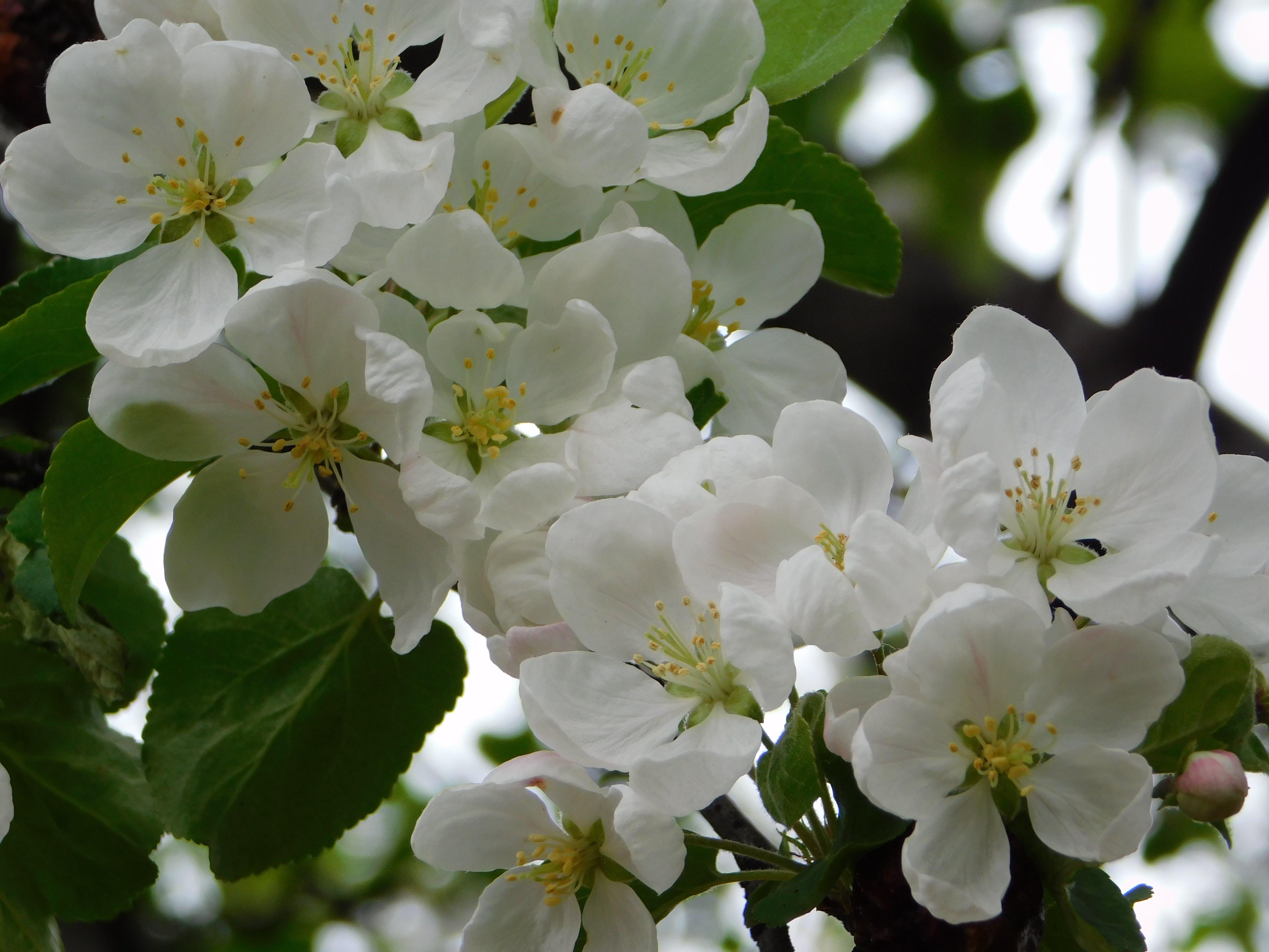 Foto stok gratis keindahan musim semi