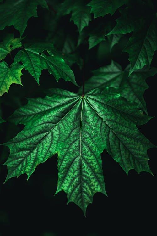 Imagine de stoc gratuită din creștere, Norvegia, plantă, verde