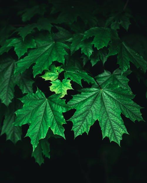 Foto profissional grátis de folhas, Noruega, planta, plantar