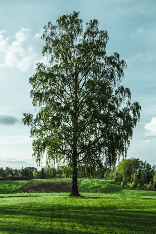 Kostnadsfri bild av gräs, landsbygden, lantlig, norge