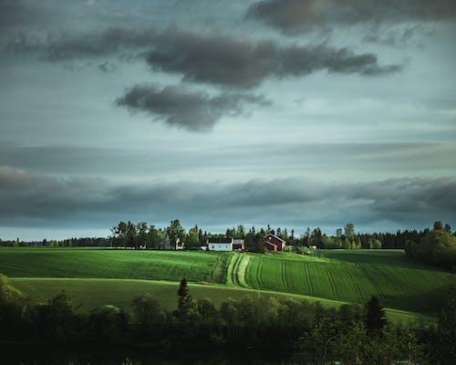 Gratis stockfoto met akkerland, boerderij, gras, landbouw