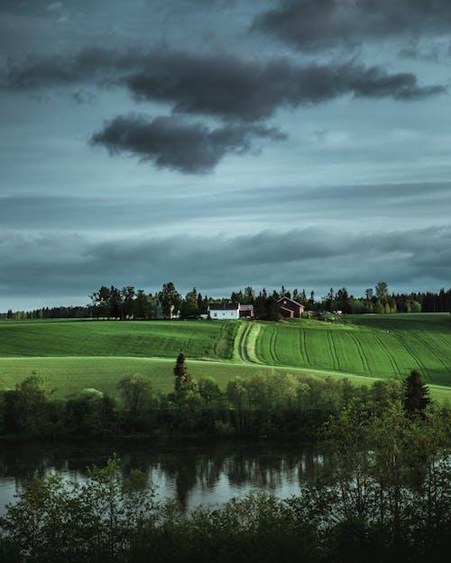Foto stok gratis agrikultura, bidang, Norway, pedesaan