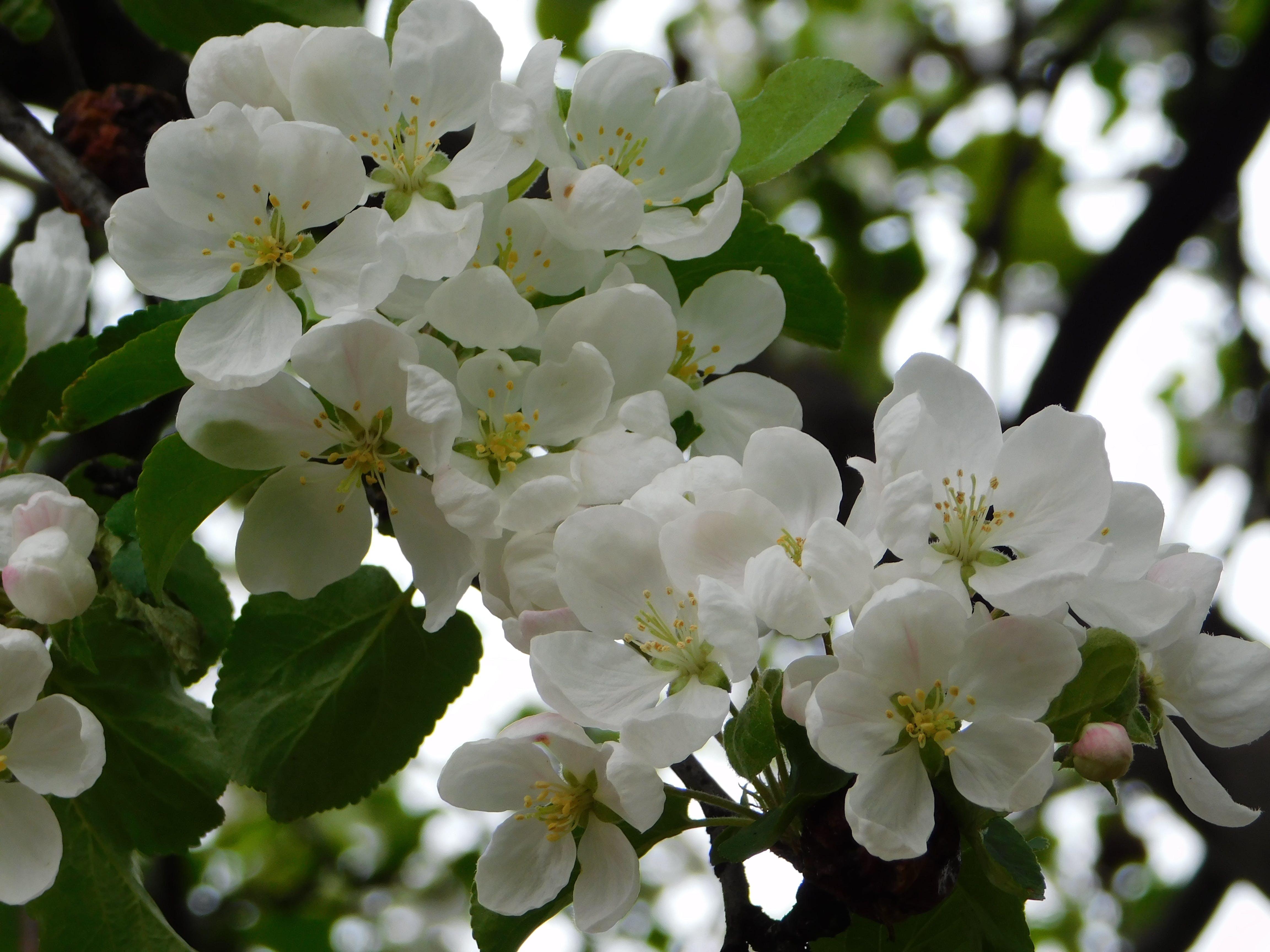 Foto stok gratis wallpaper bunga